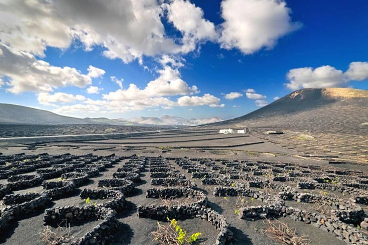 Vineyard in typical Lanzarote landscape at La Geria | 9 reasons to visit #Lanzarote | Weather2Travel.com #spain #canaryislands #travel #holiday