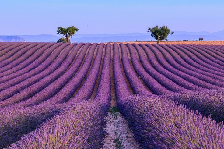 Les 25 meilleures id es de la cat gorie champs de lavande - Pharmacie de l europe salon de provence ...
