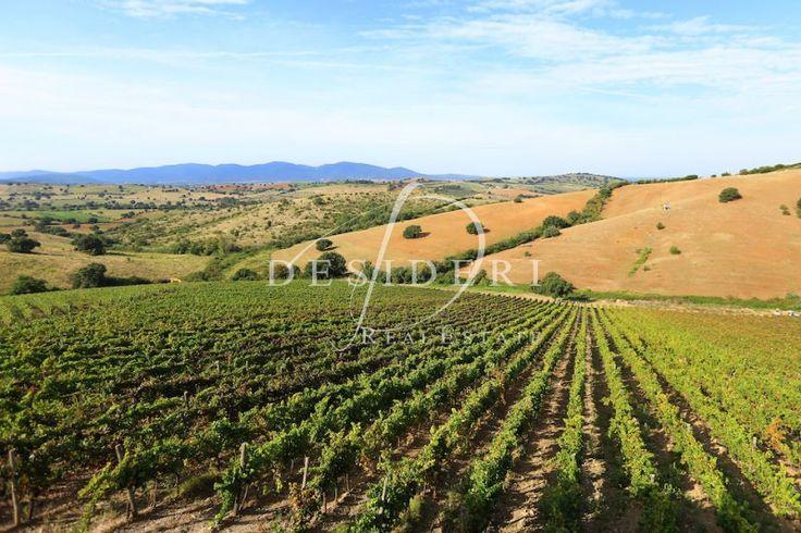 Tuscan wineyard - Morellino di Scansano