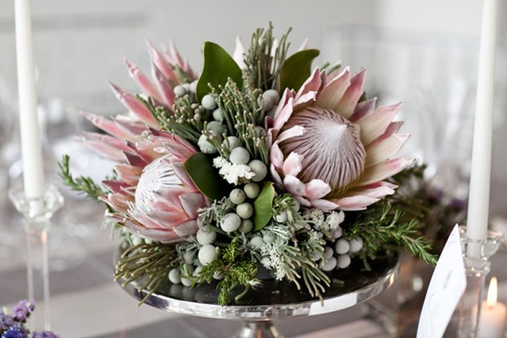 Kings and silver brunia elegant protea cynaroides for King protea flower arrangements