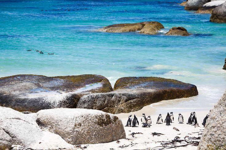 Boulders Beach in Cape Town, South Africa. #Penguin #beach