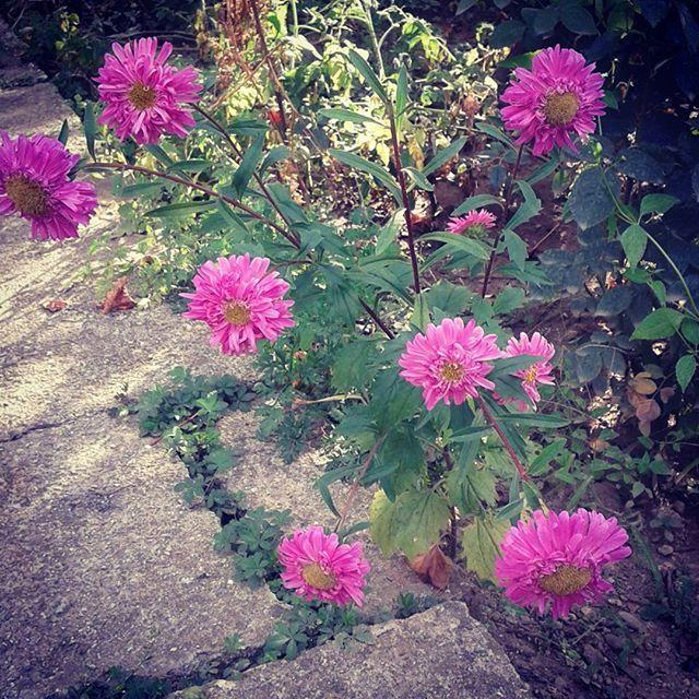 Wonderfull colors this September