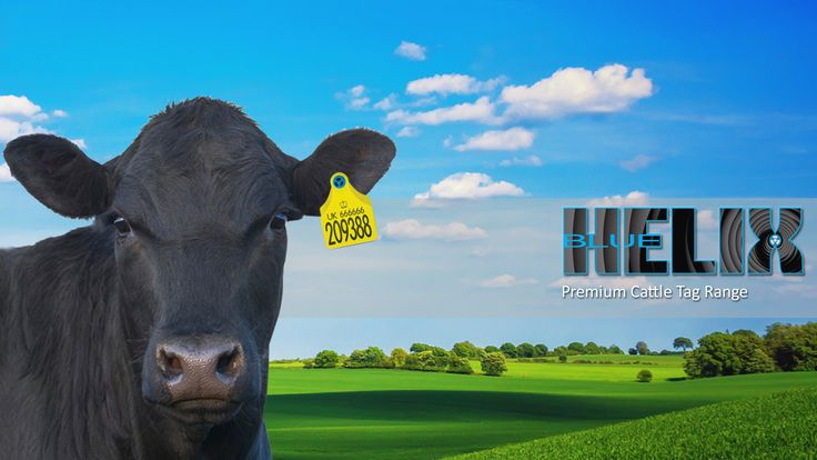 The NEW Blue Helix Cattle Tag, available exclusively from Ritchey Ltd through your trade merchants  #cattle #tags #cattletags #BlueHelix