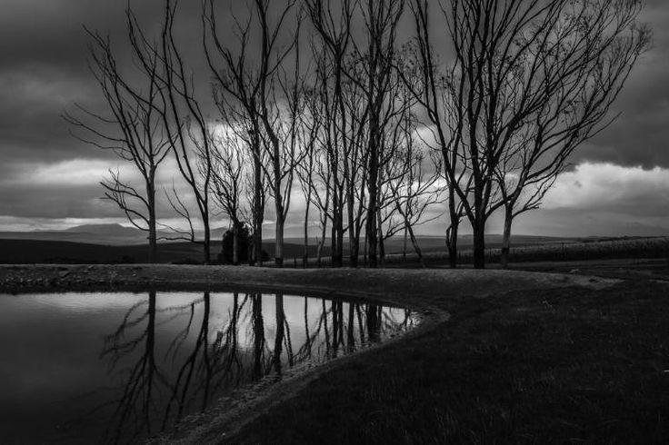 """Saatchi Art Artist johann kruger; Photography, """"Line Dance"""" #art"""