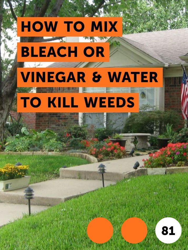 How to Mix Bleach or Vinegar & Water to Kill Weeds | Plant