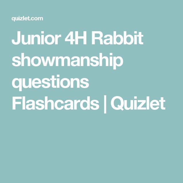 26 best rabbit images on pinterest bunny care rabbit