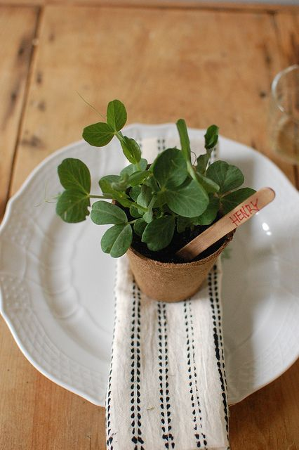 Chelsea from Frolic with Vegetable Starts Wedding Favors | Wedding Ideas and Inspiration Blog