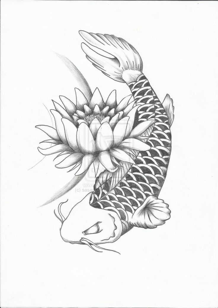 koi fish coloring pages printable