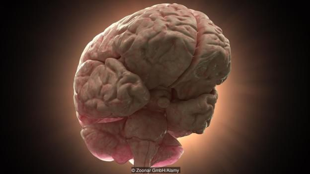 The human brain: size isn't everything (Credit: Zoonar GmbH/Alamy)
