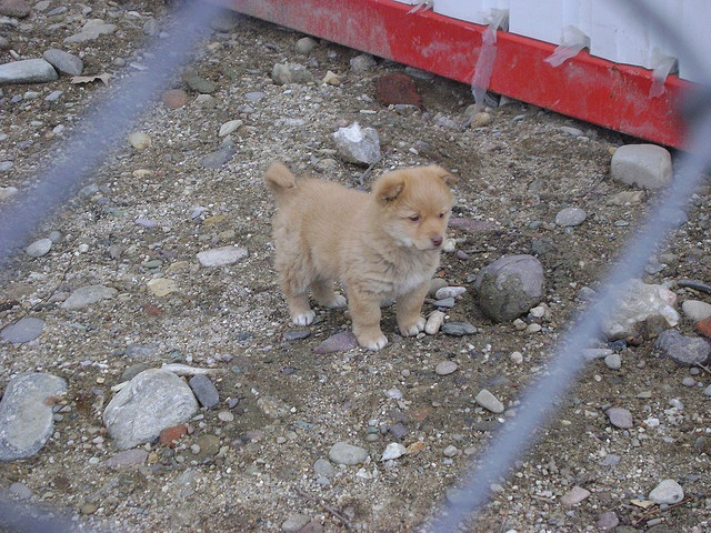 Cute Little Puppy :)