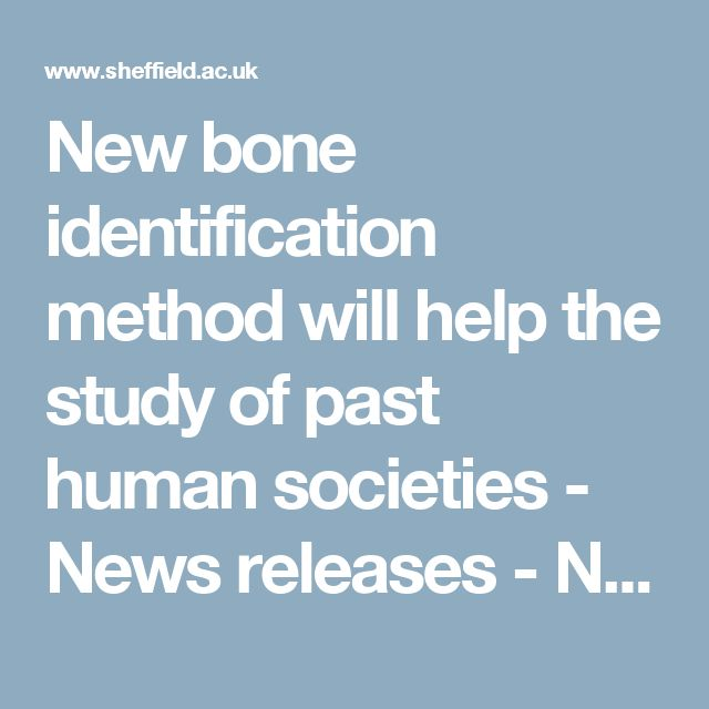 New bone identification method will help the study of past human societies - News releases - News -  The University of Sheffield