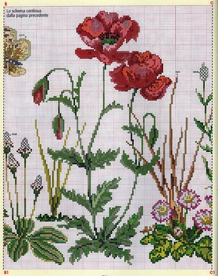 fiori di campo 4