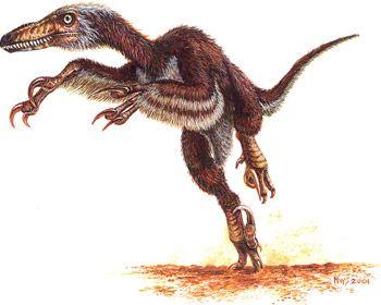 Velociraptor Quick Facts raptor dinosaur | ... ...