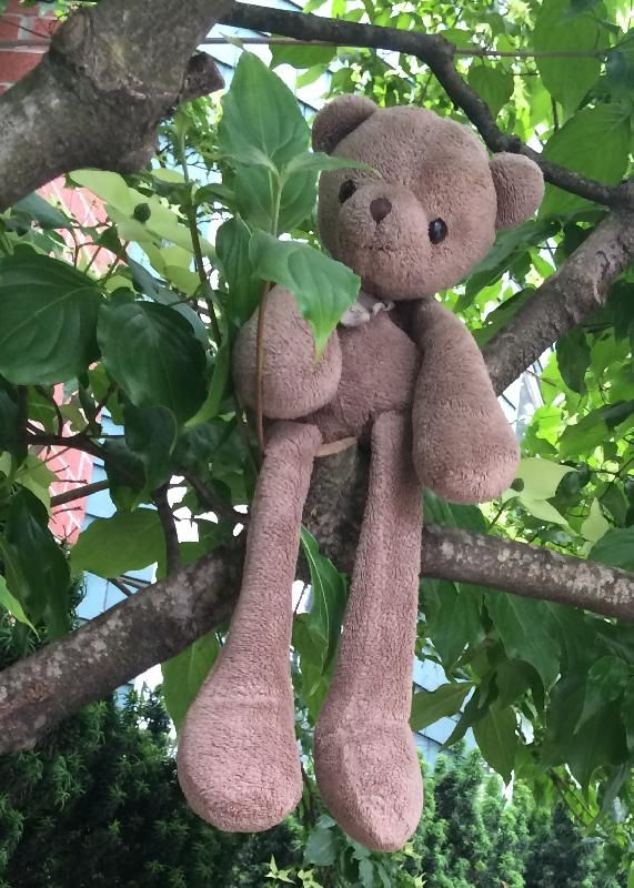 Lost on 20 Jun. 2016 @ Vancouver , bc, canada. LOST in Vancouver, Canada Our beloved teddybear stuffy , probably on our way home from school. It could be anywhere in between Ash/ W 6th , the skytrain olympic village/yaletown, Davie/pacific boul... Visit: https://whiteboomerang.com/lostteddy/msg/0j8ett (Posted by aurelie on 24 Jun. 2016)
