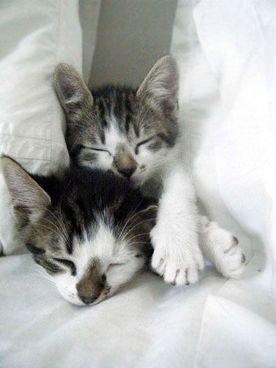 """""""Most beds will sleep up to 6 cats--ten without the owner."""" --Stephen Baker"""