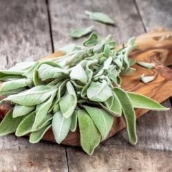 Why Sage and Smudging Clear Your Energy | Doreen Virtue |  official Angel Therapy Web site http://www.angeltherapy.com/blog/why-sage-and-smudging-clear-your-energy