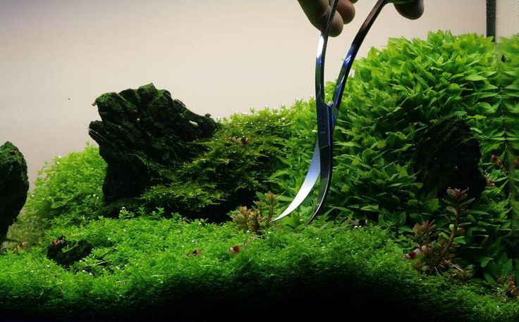 Manage your freshwater aquarium, tropical fishes and plants: How to trim aquarium plants