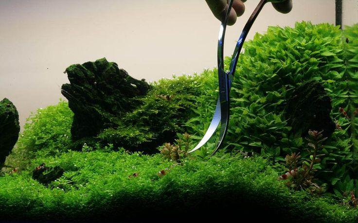 Manage your freshwater aquarium, tropical fishes and plants: How to trim aquarium plants