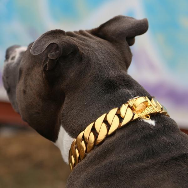 "Kilo Gold Dog Collar - BIG DOG CHAINS - 7 ------ 1.25"" width: best for future male dobe (2nd dog)"