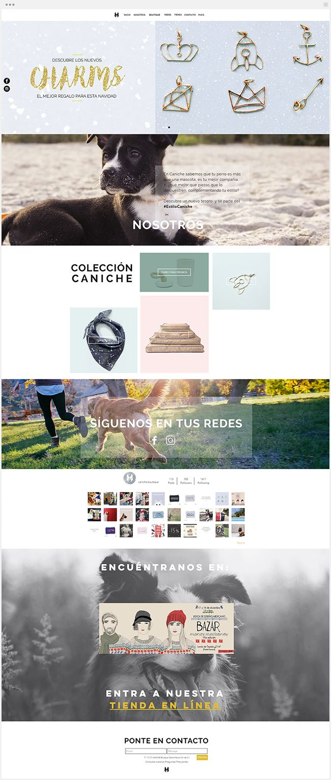Caniche | Online Store for Pets