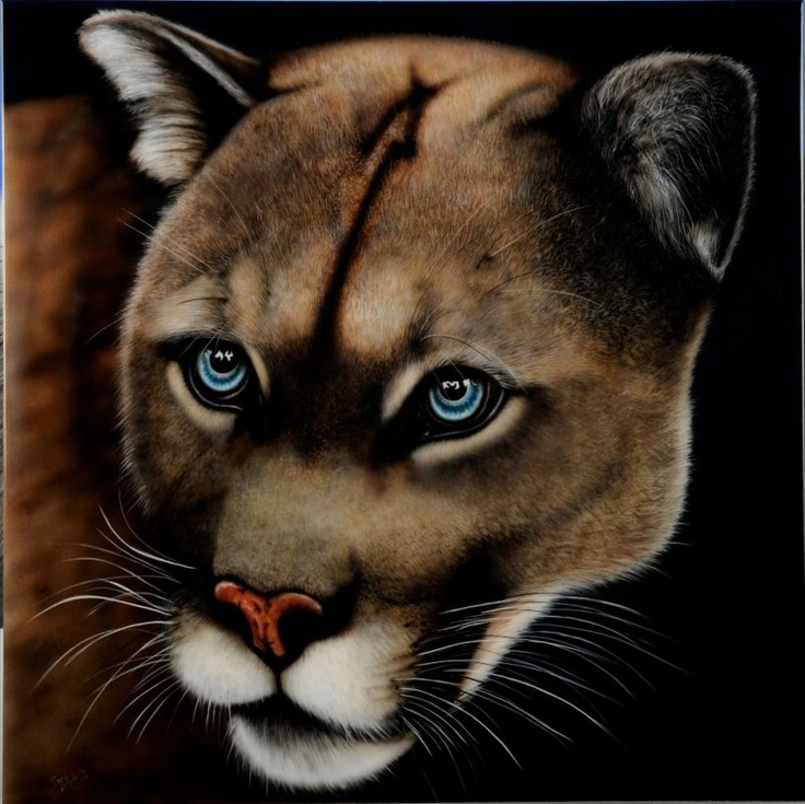 `Cougar` by Fiona Foster