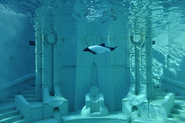Pretty cool: It's Atlantis, Sea World, San Diego and it's  a Commerson's Dolphin.