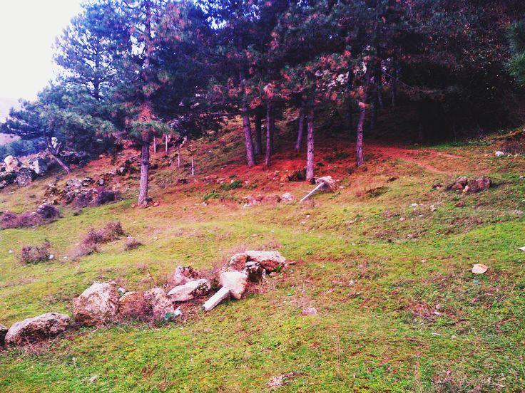 hill climb, pine, forest