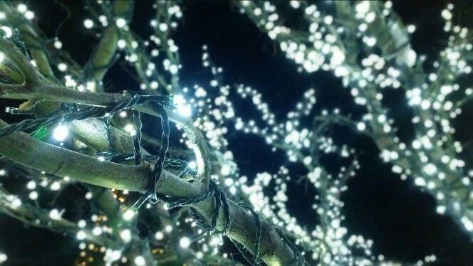 Lights tree winter