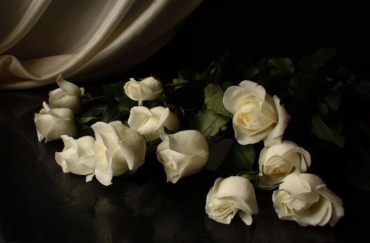 Картинки по запросу белые розы