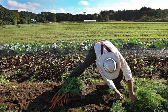 Check out Sacha Pfeiffer's article in The Boston Globe, highlighting the partnership between Food For Free and Pine Street Inn that helps guests get fresh vegetables right from the farm. http://bit.ly/2e2R4KM