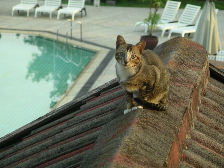 1000 Images About Cats On Roof On Pinterest Roof Tiles