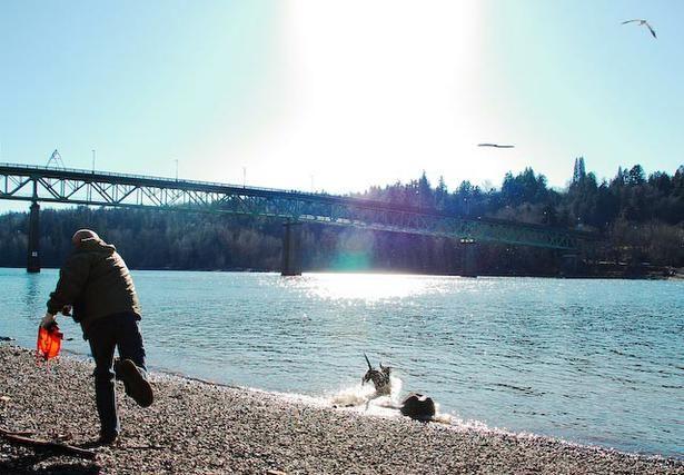 Best Dog Boarding Portland Oregon