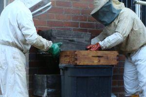Beekeeping in the KwaZulu Natal Midlands