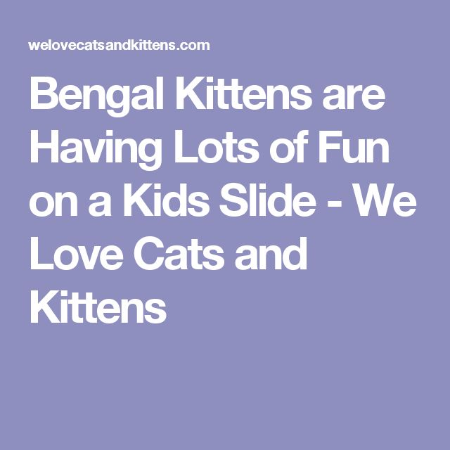 Bengal Kittens are Having Lots of Fun on a Kids Slide - We Love Cats and Kittens