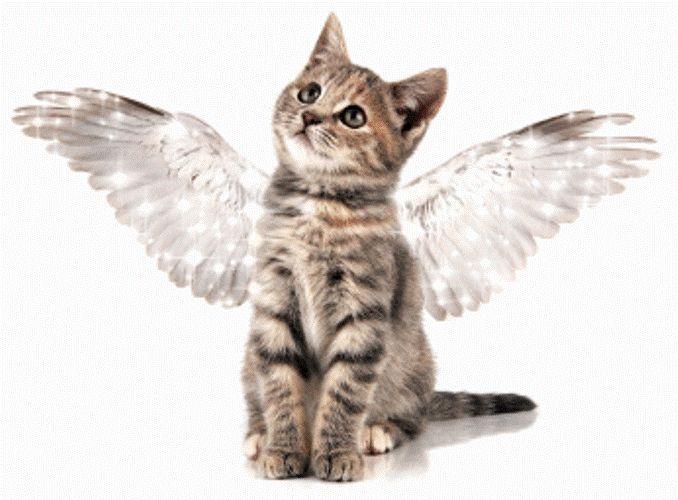 El gatito con alas