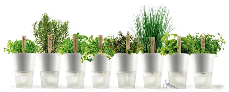 Macetas decorativas de autoregado... la plantita se alimenta absorbiendo la cantidad exacta de agua a traves de los cordones interiores. http://typo.mx/#185