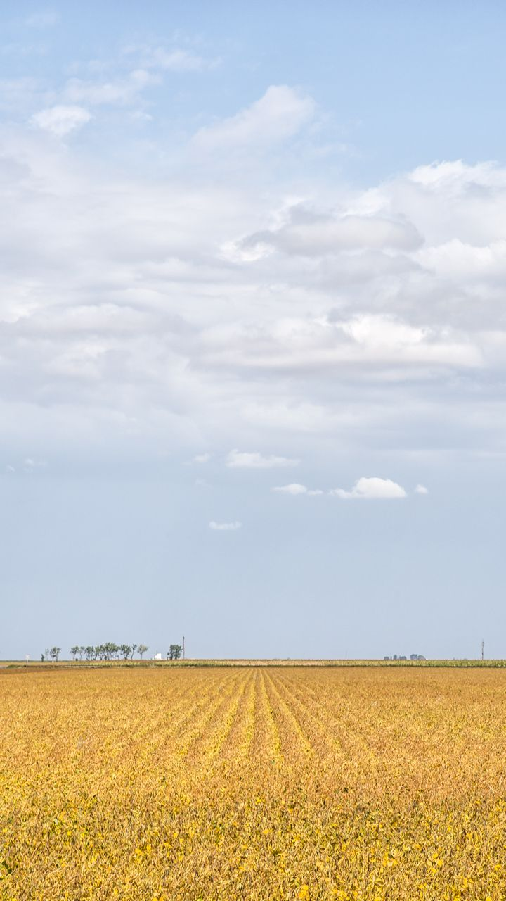 Autumn's Rows - Image taken in Manitoba, Canada by Carla Dyck