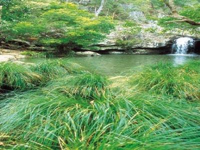 Kondalilla Falls - hinterland - sunshine coast - australia