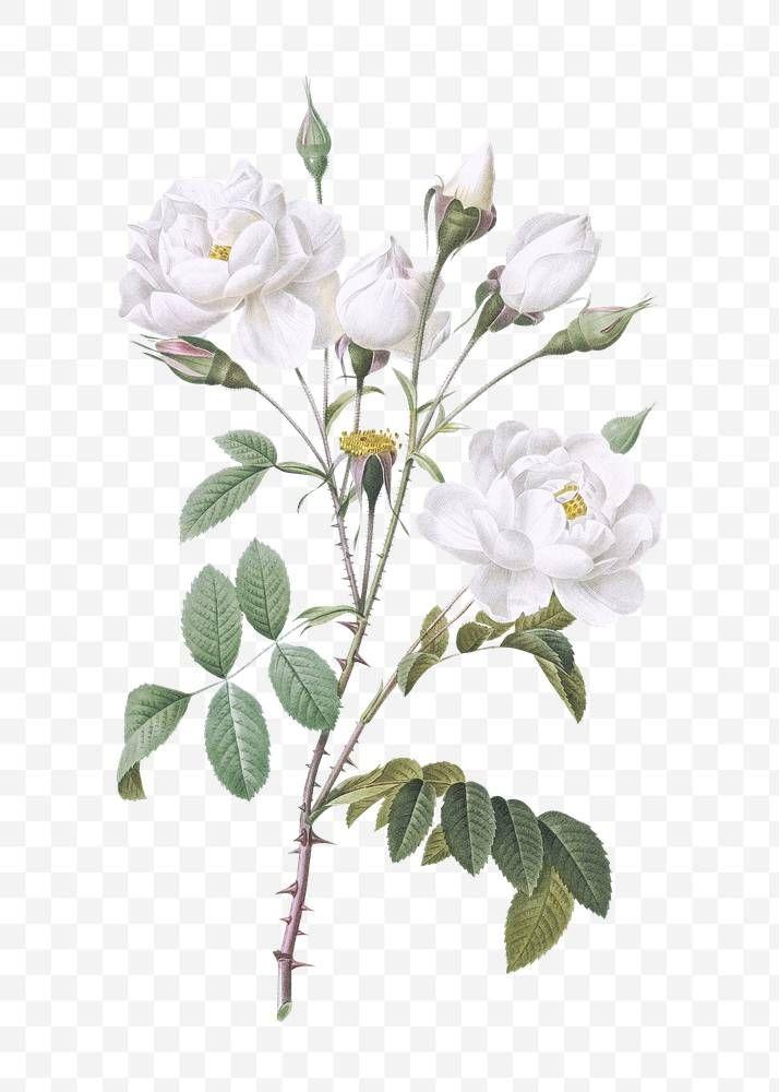 Pin By Oliver On Journals Vintage Flower Backgrounds White Flower Png Pink Flowers Background