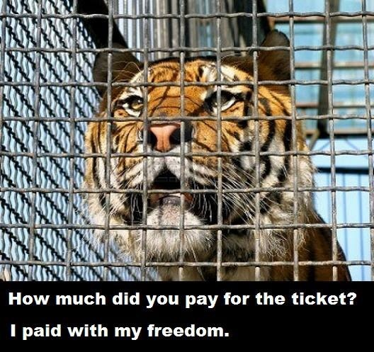 zoos are internment camps for animals and should be shut down Zoos are internment camps for animals and should be shut down essay click to continue oedipus is not formally charged with any crimes he does need a different custom e.