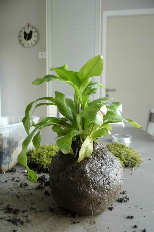Un peu de jardinage : Tuto pour faire un kokedama – Léa et compagnie