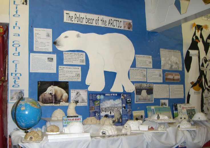 Polar Bear of the Arctic classroom display photo - Photo gallery - SparkleBox