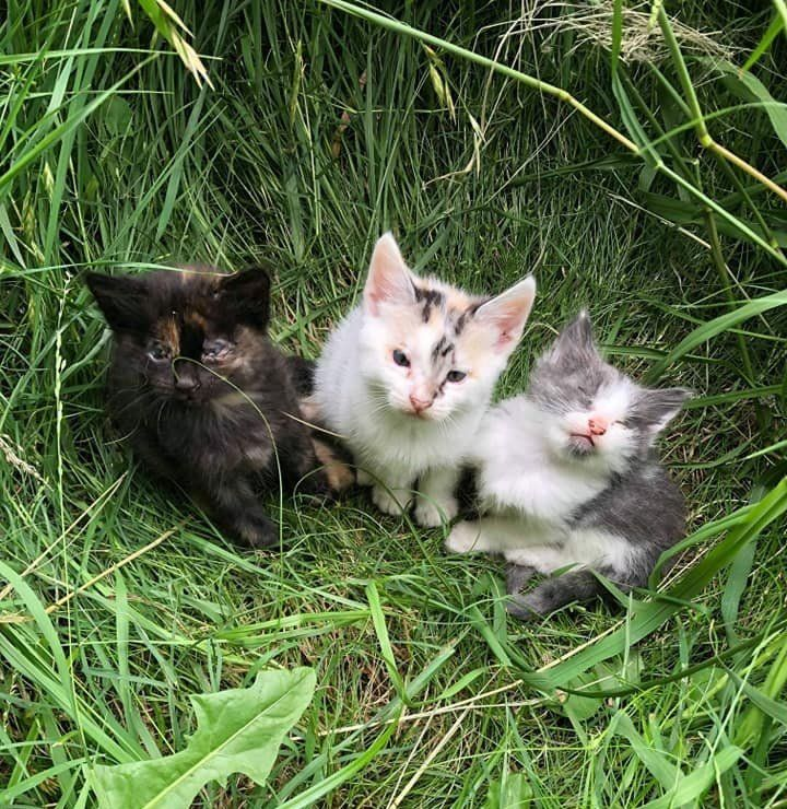 Stray Cat Walks Up To Rescuer And Leads Her To Her Kittens Who