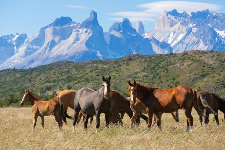 Wild horses - Patagonias Torres del Paine  The Worlds Most Spectacular National Park  Best of Web Shrine