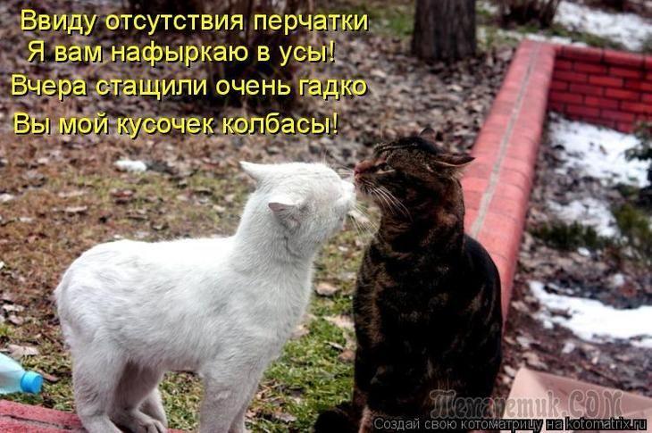 Смешные фото животных с подписями новые очень смешные