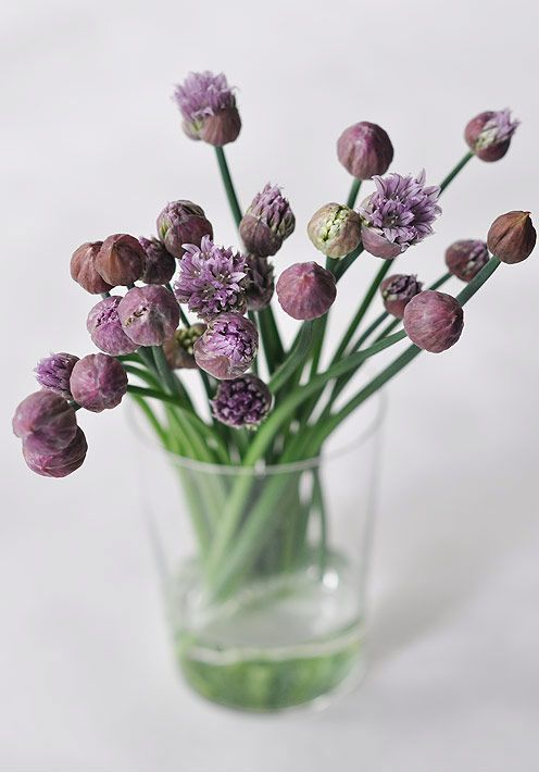.: Chive Flowers, Modern Wedding Flowers, Flowers To Inspiration