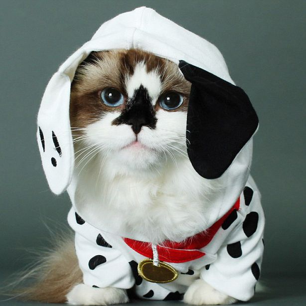 Baby Kitten Halloween Costumes