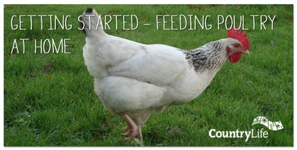 Read our guest blog from Tamara Ziegler at our Ashford CountryLife on feeding poultry at home and make sure your hens get the right balance of proteins, carbs, vitamin, minerals.....