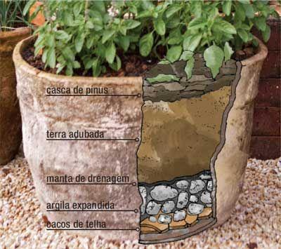 Horta em vaso: você pode plantar