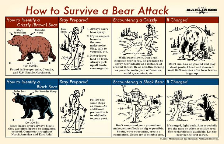 Think all bears are the same well they're not. What do if you encounter a brown bear or a black bear, which do you fight and which one do play dead? This site is awesome its for men but I find it interesting for myself to.